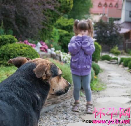 动物恐惧症:怕狗怎么办?我比它强,但我为什么害怕它?